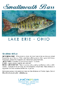 Lake Erie Smallmouth Bass Note Card