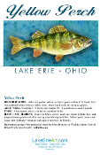 Lake Erie Yellow Perch Note Card